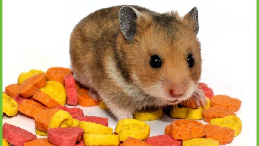 Chico de hamster van Charlotte; Leesverhaal + Kleurwedstrijd - De ...